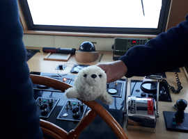 Lost Seal Soft Toy in Whitstable