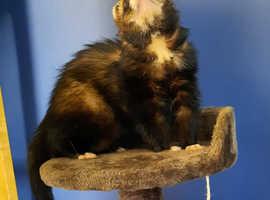 Lost ferret £100 reward