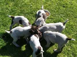 Puppies looking for loving and forever homes