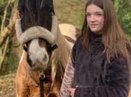 Beautiful 13.2h coloured mare