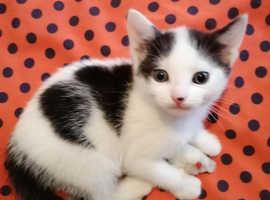 Special kitten