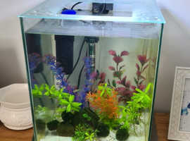 Full tank set up plus 5x pea puffer fish
