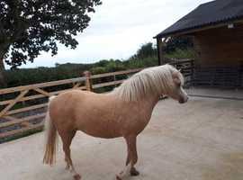 Beautiful registered sec a mare