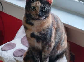 Beautiful female cat looking for her loving forever home