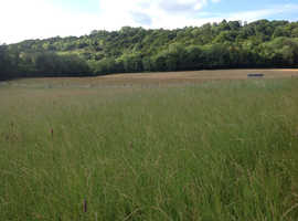 FREE  approx 14 acres grass to make hay at own cost. URGENT