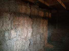 Bales of hay traditional small bales
