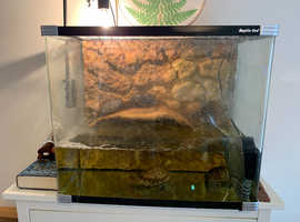 4 Musk Terrapins and full tank set up