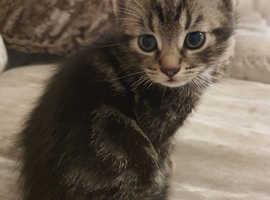 Beautiful kitten's