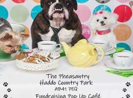 Dog Friendly Pop-up Cafe - Haddo Country Park