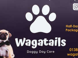 In need of a dog walker or dog sitter then why not try doggy daycare?