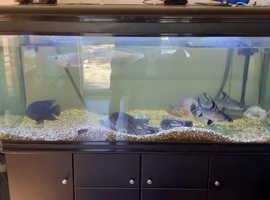 150 gallon fish tank 750 ono