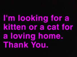 Free Cat or Kitten.