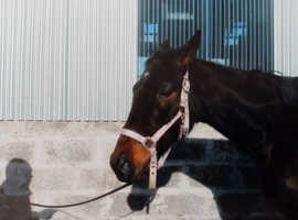 Wanted equine work