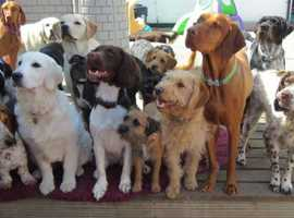 Colchester Canine Creche - The home of luxury doggie day care