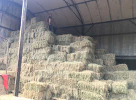 Small quality Hay Bales discount for bulk purchases