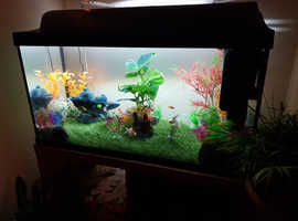 Silver/white goldfish for sale
