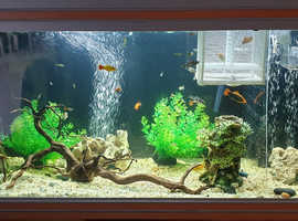 Tropical fish rehoming in Enfield