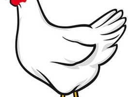 Oakfield Farm Chicken Sanctuary