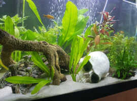90 litre tank with stand