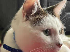 Male Neutered and microchipped
