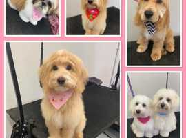 DOG DAY CARE AND GROOMING SALON  FOR SALE