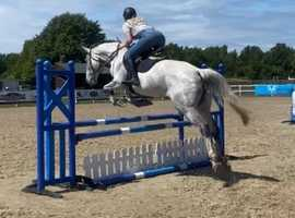 Super talented allrounder mare