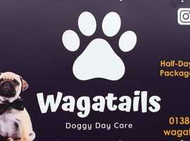Are you in need of a dog walker or dog sitter then why not try doggy daycare?