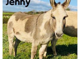 Donkeys For Sale