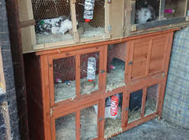 5 rabbits and hutches