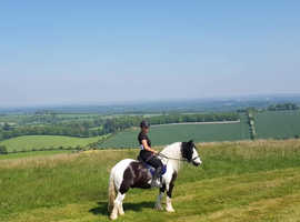 Vincent 14.1hh available for SHARE/PART LOAN