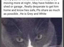 Update possible sighting on princess road mexbrough plz contact Joanne Davie or me