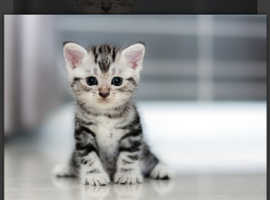 I want a kitten