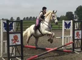 Horse share wanted