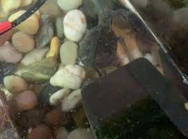 Male and female musk turtles with complete set up