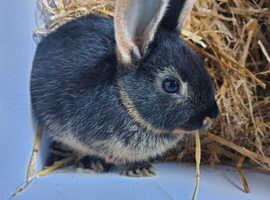 Happy bunny with Unique colour