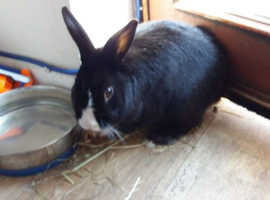 Friendly male 3 years old