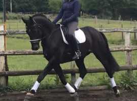 Impressive dressage horse