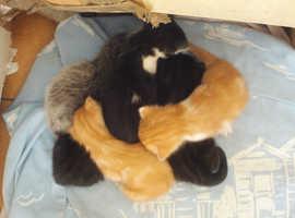 5 cute kittens