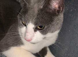 Missing Cat Wellingborough