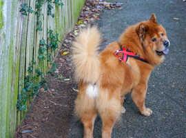 Dog walking and Pet sitting in Haywards Heath