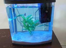 25 litre aquarium