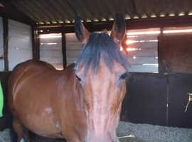 Amazing mare looking for 10* sharer