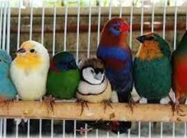 if you want to rehouse birds all are welcome