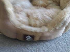 Yap Dog bed