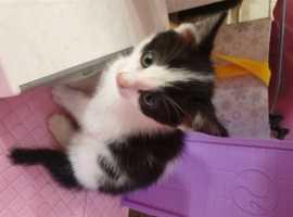 Kitten last for the lister