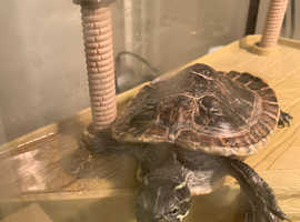 Turtles looking for home