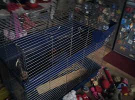 large rabbit /guinea pig cage