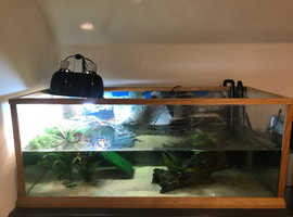 Musk turtle, tank & set up.