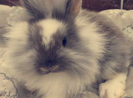 Baby bunnies available