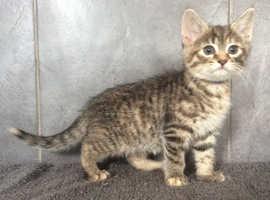 Beautiful female kittens